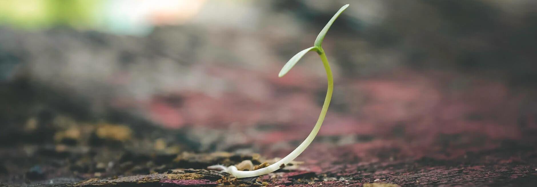 image of seedling