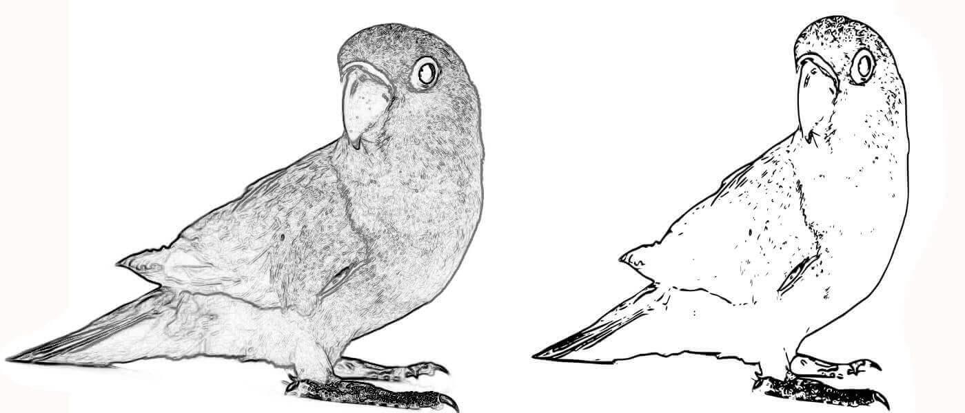 iedge-detected image of a lovebird alongside an SVG version